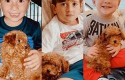 Gia đình Messi nhận nuôi thú cưng thứ hai với kích thước tí hon