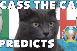 Mèo tiên tri dự đoán bóng đá EURO hôm nay 11/07: Anh vs Italia