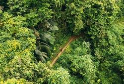 Chạy trên cung đường tuyệt đẹp của giải siêu địa hình Ba Bể Jungle Marathon