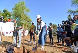 Trồng cây gây rừng ở Gia Lai với Tiền Phong Marathon