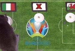 Mèo tiên tri dự đoán bóng đá EURO hôm nay 20/6: Italia vs Xứ Wales