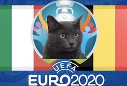 Mèo tiên tri dự đoán bóng đá EURO hôm nay 02/07: Bỉ vs Italia