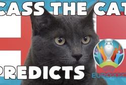 Mèo tiên tri dự đoán bóng đá EURO hôm nay 07/07: Anh vs Đan Mạch
