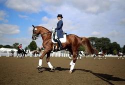 Môn cưỡi ngựa Olympic: Đầu tư tốn kém số 1?