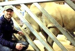 Tê giác trắng đực cuối cùng qua đời, cựu sao Arsenal hành động bất ngờ