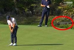 Cảnh hy hữu ở giải golf VĐTG: Hồn nhiên đấu ngay trước mõm cá sấu!