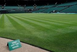 Wimbledon biến động trong 50 năm qua: Nhìn mặt sân, đoán lối chơi!