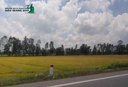 Mekong Delta Marathon Hậu Giang 2020 - Race đáng chơi của dân chạy bộ