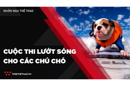 Thú vị cuộc thi lướt sóng cho các chú chó