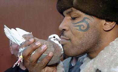 Trận chiến đầu đời của Mike Tyson: Vì một con bồ câu?