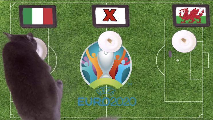 Mèo tiên tri dự đoán kết quả bóng đá Italia vs Xứ Wales