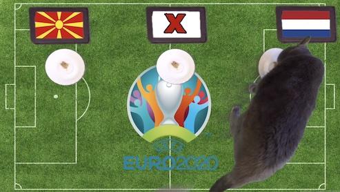 Mèo tiên tri dự đoán kết quả bóng đá Bắc Macedonia vs Hà Lan