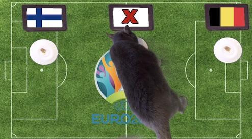 Mèo tiên tri dự đoán kết quả bóng đá Phần Lan vs Bỉ