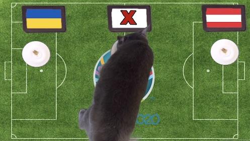 Mèo tiên tri dự đoán kết quả bóng đá Ukraine vs Áo