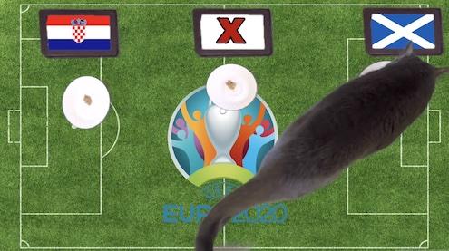 Mèo tiên tri dự đoán kết quả bóng đá Croatia vs Scotland