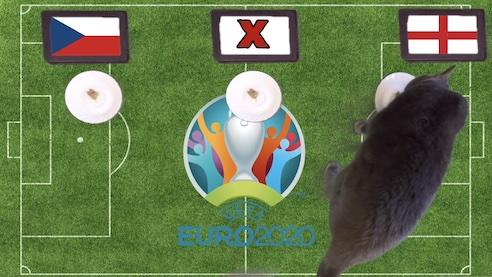 Mèo tiên tri dự đoán kết quả bóng đá CH Séc vs Anh
