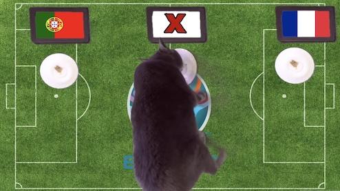 Mèo tiên tri dự đoán kết quả bóng đá Đức vs Hungary