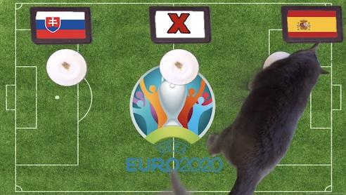 Mèo tiên tri dự đoán kết quả bóng đá Slovakia vs Tây Ban Nha