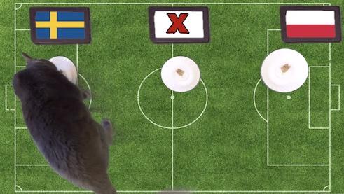 Mèo tiên tri dự đoán kết quả bóng đá Thụy Điển vs Ba Lan