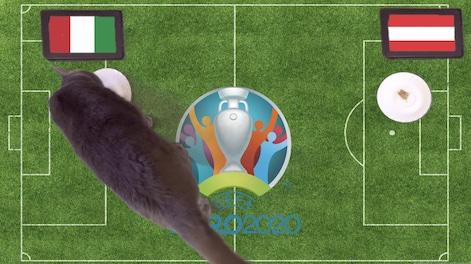 Mèo tiên tri dự đoán kết quả bóng đá Italia vs Áo