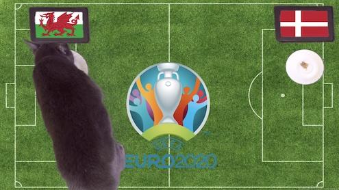 Mèo tiên tri dự đoán kết quả bóng đá Xứ Wales vs Đan Mạch