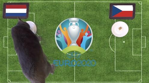 Mèo tiên tri dự đoán kết quả bóng đá Hà Lan vs CH Séc