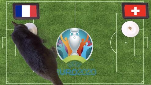 Mèo tiên tri dự đoán kết quả bóng đá Pháp vs Thụy Sỹ