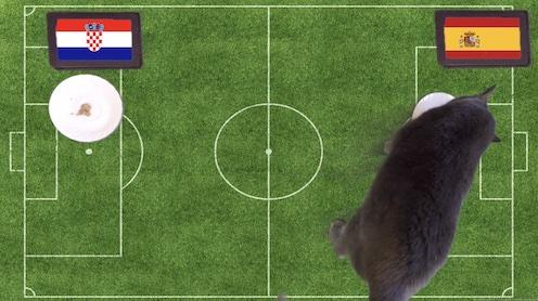 Mèo tiên tri dự đoán kết quả bóng đá Croatia vs Tây Ban Nha