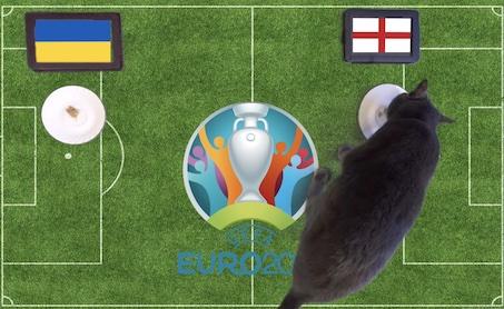 Mèo tiên tri dự đoán kết quả bóng đá Ukraine vs Anh