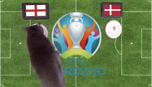 Mèo tiên tri dự đoán kết quả bóng đá Anh vs Đan Mạch