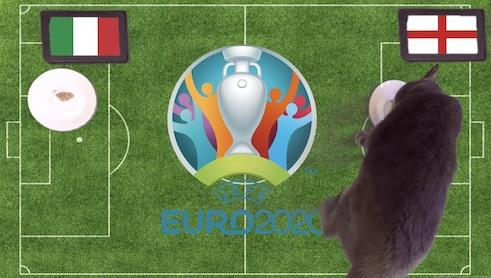Mèo tiên tri dự đoán kết quả bóng đá Anh vs Italia