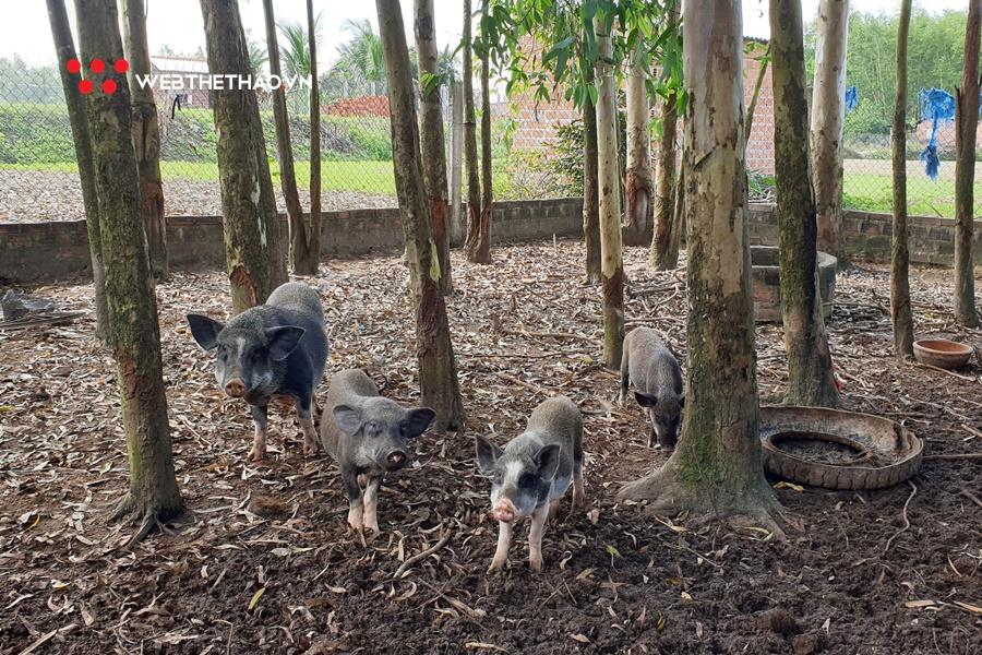 Về quê Hồng Lệ chăn lợn rừng, đuổi gà chạy bộ và ăn cà xanh chấm mắm cá