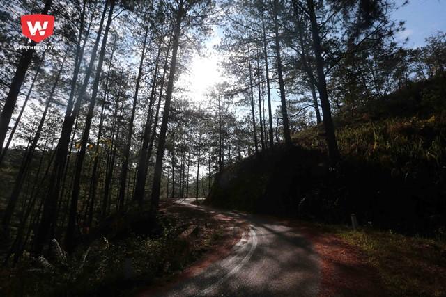 ...cho đến hàng chục cây số cũng đều uốn lượn dưới những tán thông xanh biếc của Đà Lạt.