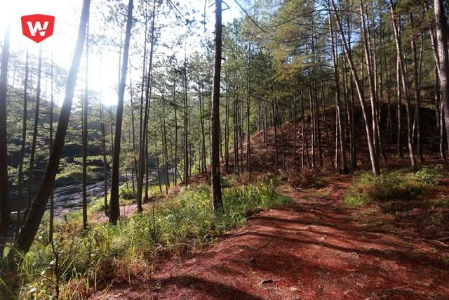 Một giải Ultra trail được tổ chức ở nột nơi được mệnh danh là xứ ngàn thông...